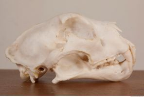 Photo Reference Of Skull by environment-textures