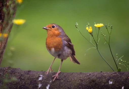 UntitledMy feathered friend..... by ollie2008
