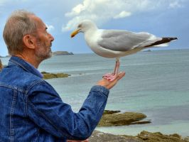 The Seagull Whisperer by MisterKrababbel
