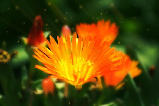Orange Flower fantasy by Oddslane