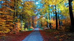 colorful autumn by Mittelfranke