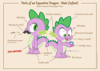 Parts of an Equestria Dragon - Male (Infant) by dm29