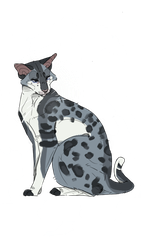 [Pebblestar of Windclan] by Lush-Laws