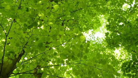 delicate leaves by dendoona