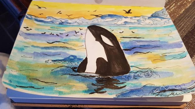 Orca (watercolors) by Euclaser