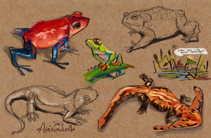 sketches of amphibians by AlaxendrA