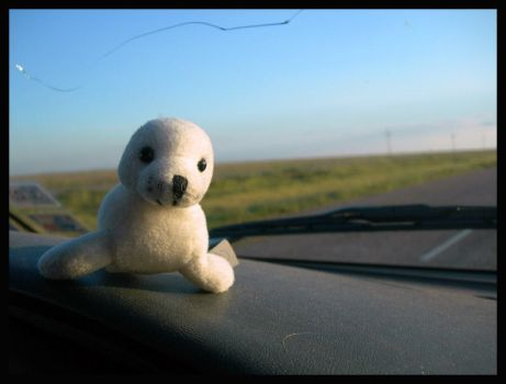 Teddy on the Road by smokerette