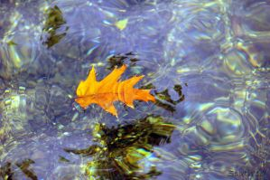 Fall Leaf Two by BrianSouth