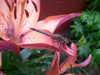 Dragonfly on Flower by Psycho-101