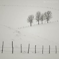 fences by adypetrisor