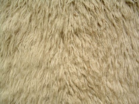 matted fur by thrak-stock