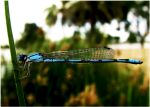 Dragonfly by wonenownlee