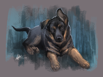 German Shepherd pup by ISHAWEE