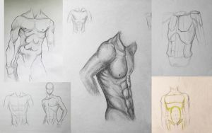 Male torso (sketch) by Bastet-mrr