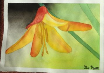 Orange Lily by solacensquirrelcansr