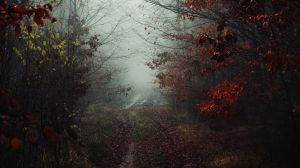 Haunted side of the fall by kriskeleris