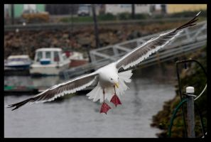 See Sea Gull by Avaryc
