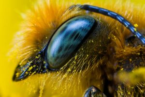 Miner Bee at 5x II by dalantech