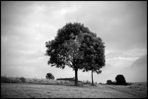 Lonely Tree 2 by ryanhatfield