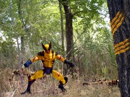 Wolverine by buzzbo