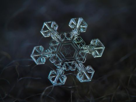Real snowflake macro photo - Ice crown by ChaoticMind75