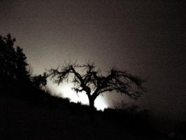 Tree in the dark by Ludo38