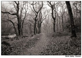 Woods 1 by jambo-uk