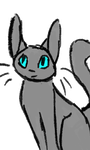 Grey cat with blue eyes blink and bounce animation by MCSpiritWolf