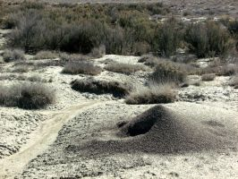 ant hill 2 by Klutzillia