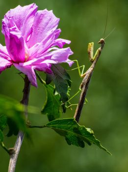 Mantis flower by Twilightbourne