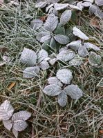 Frosty Leaves 1 by SnowWolfx13