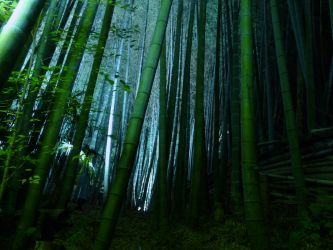Bamboo Forest by jihel