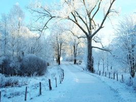 Frosty path by morgy23