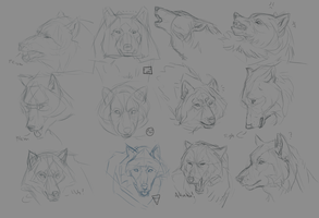 Wolf face and expressions practice 1-12 by Roiuky