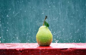 drenched pear by SAVALISTE
