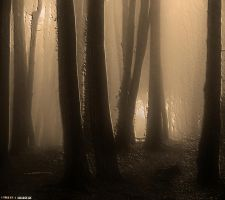 Mistery Forest.. by Tigles1Artistry