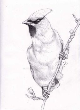 Clever Drawing of a Cool Bird!