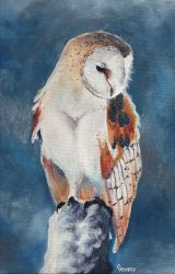 Barn Owl by Gem1ny