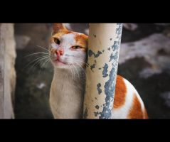 Urban Cats - 64 by MARX77
