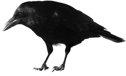 crow 3 by peroni68