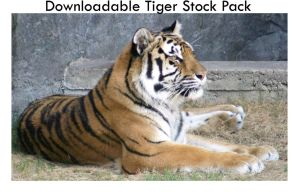 Tiger Stock Pack 6 Images by Della-Stock