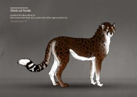 Shedu cat female 90 by Templado