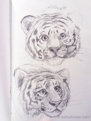 Tiger sketches by kalicothekat