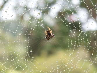 Upside Down World Inside Raindrops On Spider's Web by UnbridledMuse