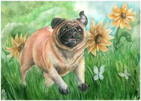 Sunshine pug by AlbinaDiamond