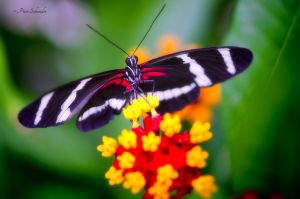Colour wings (VII). by Phototubby