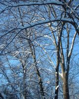 Snowy Branches by Cimeara