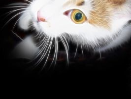 Fractal cat for Lajka 06 by oo0d3v1l0oo