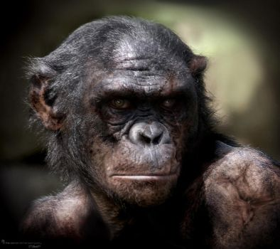 Rise of the planet of the Apes Koba by JSMarantz