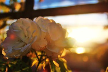 Sunset Flower 2 by PhotonicBohemian